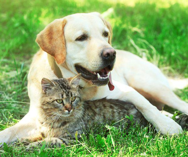 dog-cat-grass