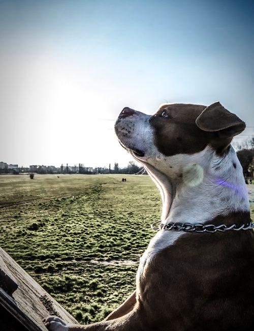Dog-Up