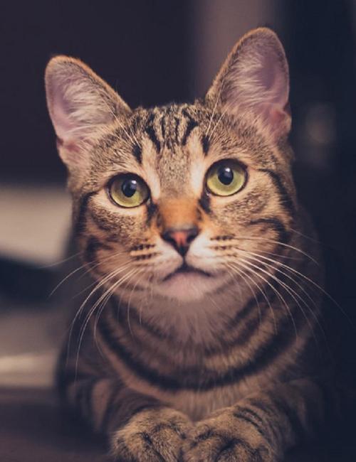 cat-1246736-pixabay